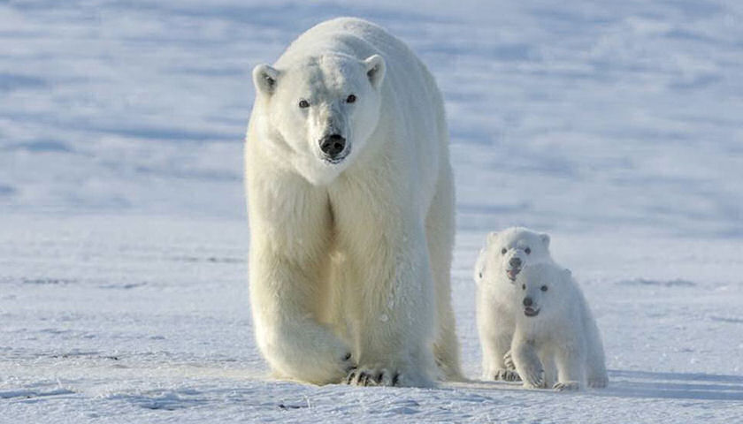 Churchill Arctic Family Adventure